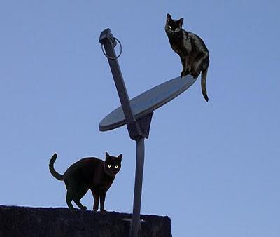 sky gato