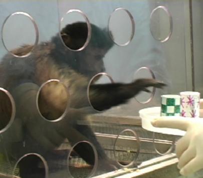 Moralidade entre animais.