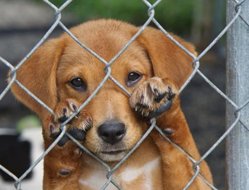 Câmara penaliza maltratos a animais domésticos.